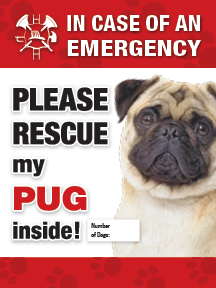 emergency sticker please rescue my (fawn) pug - Click Image to Close